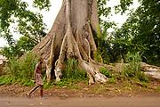 A man passing by a huge ocá (oka) tree, in São Tomé island.