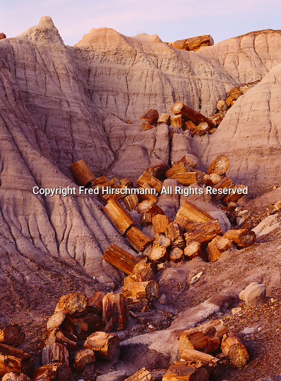 Blue Mesa Log Fall, Petrified Forest National Park, Arizona.
