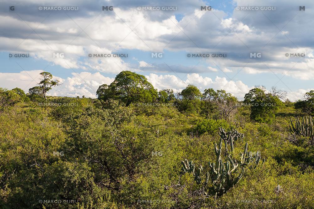MONTE CORDOBES, SAN MARCOS SIERRAS, PROVINCIA DE CORDOBA, ARGENTINA (PHOTO © MARCO GUOLI - ALL RIGHTS RESERVED)