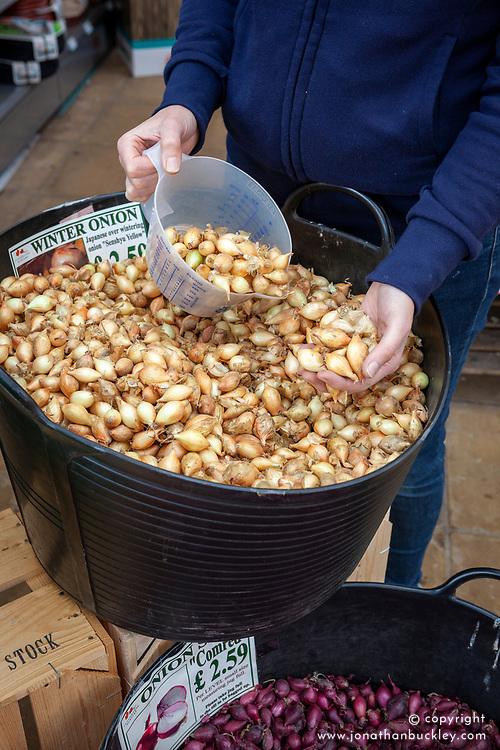 Buying onion bulbs in a garden centre