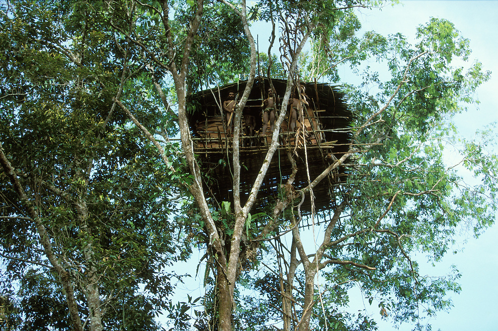 Three Kombai men stand outside a newly built treehouse some 25 meters up in a tall tree in Papua, Indonesia. September 2000. The Kombai are a so-called treehouse people, building their homes high up in the trees.