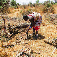 """Meteine, a young lady is pictured cutting pieces of wood to carry back home.<br /> <br /> """"We don't believe in cutting wood. We only collect fallen branches or trees because we believe that it is trees that bring rain and having experienced long periods of drought where we lost great numbers of livestock, we know by cutting down trees we  would not only doing an injustice to the environment but to ourselves."""" ~ Meteine Manina"""