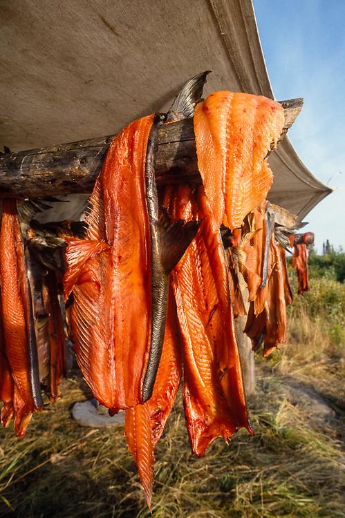 Salmon air drying, Kobuk River fish camp, Kobuk Valley National Park, Alaska, USA