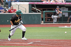 06 July 2013:  Mark Winters makes the calls behind catcher Mirabal and batter and Santiago Chirino bunts during a Frontier League Baseball game between the Gateway Grizzlies and the Normal CornBelters at Corn Crib Stadium on the campus of Heartland Community College in Normal Illinois