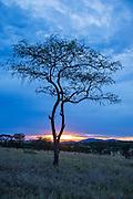 Serengeti National Park, Tanzania
