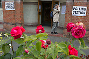 Seen through the Labour Party symbol red roses, an elderly voter reads an information poster at the polling station on the morning of the UK 2017 general elections outside St. Saviours Parish Hall in Herne Hill, Lambeth, on 8th June 2017, in London, England.