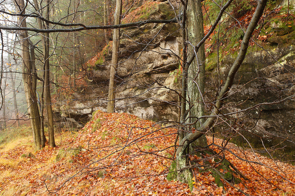 FOREST IN AUTUMN. CHRIBSKA. CESKE SVYCARSKO. CZECH REPUBLIC.