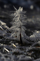 Ice crystals formed overnight, China, Sichuan Province, Garze Prefecture, Serxu County.