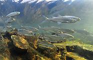 Cisco, Underwater