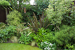 Shady foliage border planted mainly for contrasting leaf shapes including phormium, hellebores, osmanthus and hardy geraniums