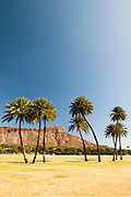 Eight palm trees in front of Diamond Head Crater on the island of Oahu in Hawaii.