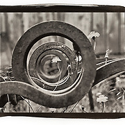 A dandelion is framed by the rusty iron circle shapes of a piece of old farming equipment.