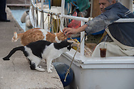 The Greeks are so kind to cats. They feed them and love on them, never shooing them away. And the cats know they're going to be taken care of, so they're never pushy or annoying. It was really fascinating to see this same dynamic across all the islands we visited and even on the mainland. Here a fisherman, just returned with the night's haul, gives a little love after he shared some fish.