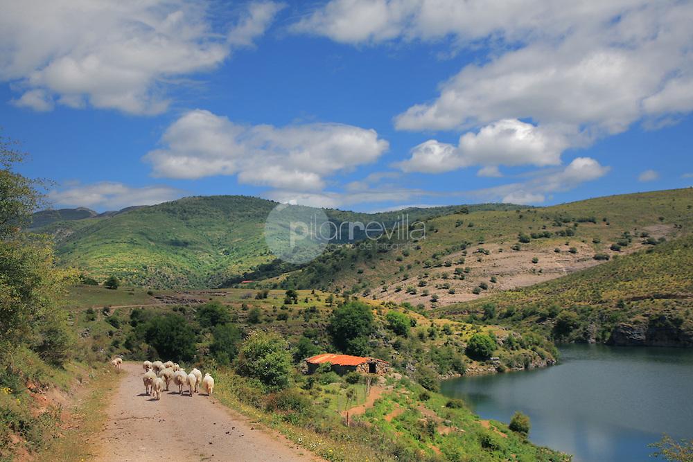 Rebaño de ovejas. Valle del rio Portilla. La Rioja ©Daniel Acevedo / PILAR REVILLA