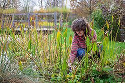 Cutting down arum lilies by a stream