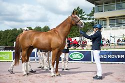 Gabriella Lof, (SWE), Doniro, - Horse Inspection Para Dressage - Alltech FEI World Equestrian Games™ 2014 - Normandy, France.<br /> © Hippo Foto Team - Jon Stroud<br /> 25/06/14