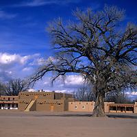 USA, New Mexico, Santa Fe. Grand dramatic tree in the center of San Ildefonso Pueblo.
