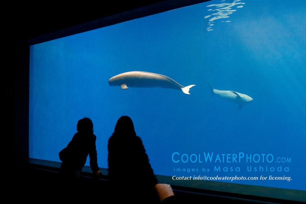 aquarium visitors observing a pair of finless porpoises, Neophocaena phocaenoides (c), Info-Pacific Ocean