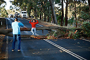 An asian tourist beeing portraid near a fallen tree on the Caves Road, near the wine famous Margaret River region.