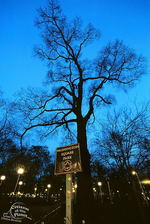 Elm Tree, The Hanging Tree, Washington Square Park, Manhattan, New York