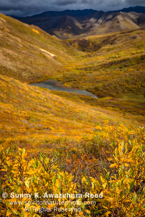 Fall color tundra valley with pond along Polychrome Pass. Polychrome Mountains in the background. Denali National Park & Preserve, Interior Alaska, Autumn. Vertical image.