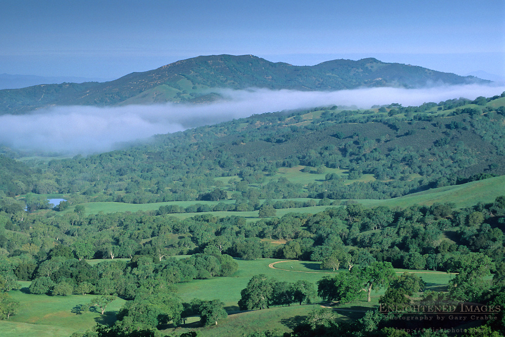 Morning fog over oak trees and valley in spring, Adelaida Road, Paso Robles, San Luis Obispo County, California