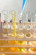 Conceptual image of a science experiment. Test tubes in a rack