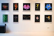 Zur Gruppenausstellung NEW WALL / POP UP GALLERY sind Künstler unterschiedlicher Genres eingeladen. Sie zeigen Ihre neuesten Arbeiten aus den Bereichen Malerei, Fotografie Skulptur und Urban Art.<br /> <br /> <br /> Der Name – nicht nur Anspielung auf die Location im Neuen Wall – bedeutet Aufbruch zu neuen Seh-Gewohnheiten. Unter dem Konzept NEW WALL wird die Wand selbst zum Protagonisten und zum Objekt der Auseinandersetzung. Wände sind Grenzen, aber Wände können auch durchbrochen werden. Die jungen Künstler tun das, wofür Künstler gemeinhin bekannt sind, sie durchbrechen mit ihren Arbeiten Grenzen in Auseinandersetzung mit sich und der realen und virtuellen Welt.<br /> <br /> <br /> Kunst im Zentrum des Kommerzes kann provozieren, aber auch Synergien und neue Einblicke schaffen. Fünfzehn moderne Künstlerinnen und Künstler nehmen sich die Wände im Neuen Wall 72 vor und zeigen Ihre Werke vom 23. bis 25. März 2018. ab 17h