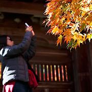 Enjoying and photographing autumn foliage at Horin-ji in Arashiyama, Kyoto.