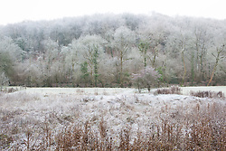Damp conservation area and woodland, Gloucestershire, on a frosty winter's morning