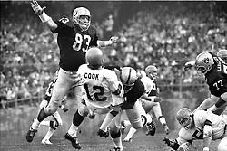 Oakland Raider Ben Davidson and other Raiders sack Ken Cook of the Cincinnati Bengals. (photo/Ron Riesterer)