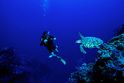 Green Sea Turtle & Diver - Grand Cayman B.W.I.
