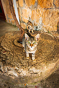 Farm cats on an olive press wheel, Sudurad, Sipan Island, Dalmatian Coast, Croatia