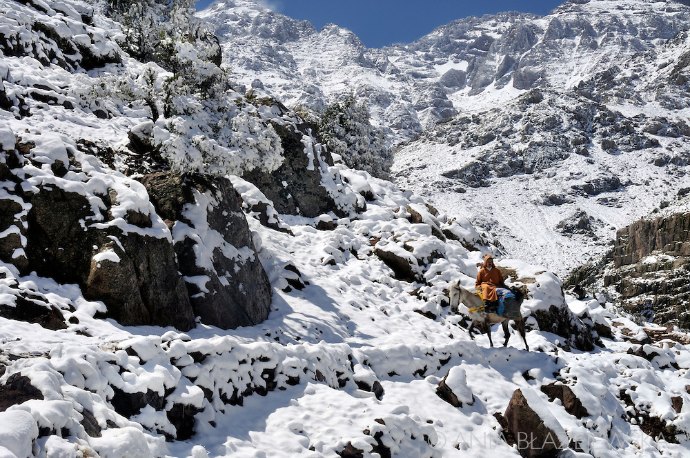 Morocco. Man riding a mule in the High Atlas Mountains covered with snow.