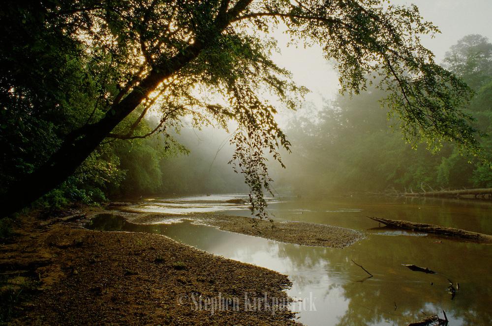 Black Creek on foggy morning - Mississippi.