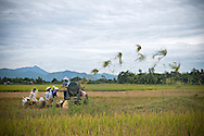 A group of vietnamese farmers separate seeds from straws with the help of a machine. They stand in a rice field. Khanh Hoa area, Vietnam, Asia.