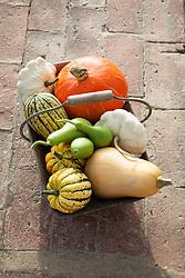 Basket of harvested pumpkins and squash