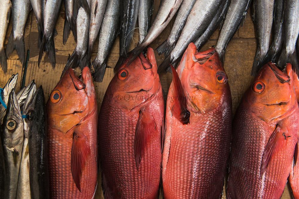 Red Snapper & Barracuda<br /> Coral Reef Species for sale<br /> Suva Sea Food Market<br /> Suva<br /> Viti Levu<br /> Fiji. <br /> South Pacific