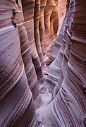Zebra Slot Canyon, Grand Staircase-Escalante National Monument, Utah, USA. Directions to unmarked trailhead for Zebra and Tunnel Slot Canyons: From Escalante town, drive 6 miles east on Highway 12, turn right on Hole-in-the-Rock Road, drive 7.8 miles to the third cattle guard and park on west side of road. Hike east on well-trodden but unmarked path, 5 miles round trip to Zebra Slot, plus an optional 3 miles round trip to Tunnel Slot (750 feet gain over 8 miles), using map from GSENM Visitor Center or canyoneeringusa.com. The image was stitched from 2 overlapping photos to increase depth of focus.