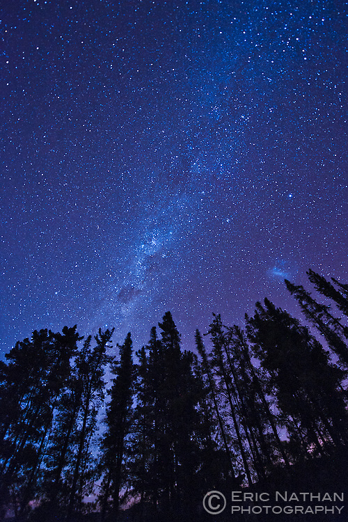 Stars above a line of trees in the Cederberg Mountains of South Africa.