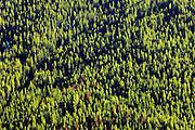 Mountain slope. Kootenay National Park<br /> Kootenay National Park<br /> British Columbia<br /> Canada