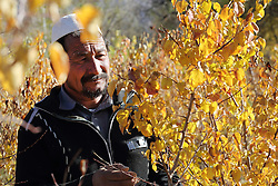 Samad checks on fruit tree saplings that have ben planted by the community on land loaned to them as part of an NCA agriculture project Chaprasak village,  Shahrestan, Daikundi Province, Afghanistan.