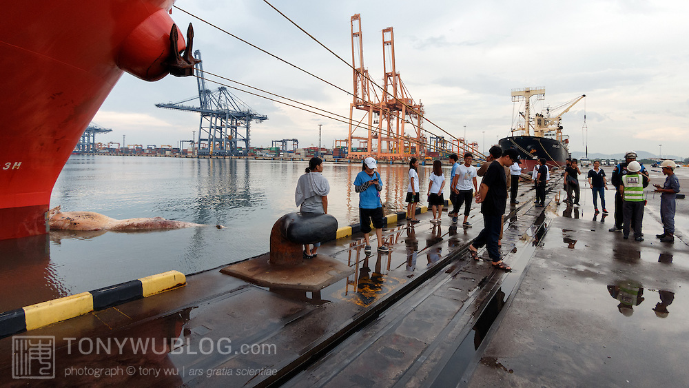 Researchers preparing to retrieve the carcass of a 12.8m female Bryde's whale (Balaenoptera edeni brydei) that appeared to have been brought into port on the bow of the ship pictured here. Though the cause of death was not entirely clear, the ship was known to have traveled for four to five days from China to Thailand. The whale could have died from impact. There were signs of blunt trauma, including the broken pectoral fin, which can be seen here. The whale was covered with bite marks from cookie cutter sharks, indicating that it was probably not one of the Gulf of Thailand's resident Eden's whales.