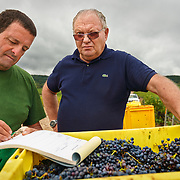 Michel Bautrait at Champagne Mumm's vineyard in Mailly.