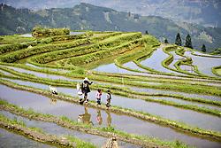 April 18, 2018 - Congjiang, China - Farmers transplant rice seedlings at terraced fields in Congjiang, southwest China's Guizhou Province. (Credit Image: © SIPA Asia via ZUMA Wire)