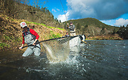"Guide Kate Taylor nets a not to happy 34 1/2"" hen steelhead for a very happy J.O. on a coastal Oregon river."