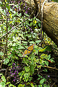 Monarch butterflies sun on sage bushes in their over-wintering site at the Sierra Chincua Biosphere Reserve January 20, 2020 near Angangueo, Michoacan, Mexico. The monarch butterfly migration is a phenomenon across North America, where the butterflies migrates each autumn to overwintering sites in Central Mexico.