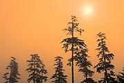 Trees in Fog on Agate Beach. Naikoon Provincial Park. Graham Island. , Haida Gwaii (formerly the Queen Charlotte Islands), British Columbia, Canada