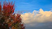 USA, Oregon, Keizer, fall foliage and the sunrise.