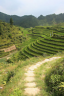 Rice fields following a hilly landscape in the area of Ping'an with a tiny paved path. Guangxi, China, Asia